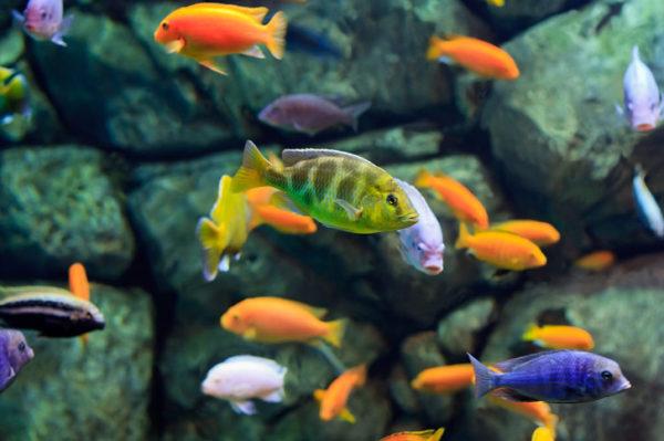 African Cichlid Aquarium Setup Guide Hi Tek Aquariums